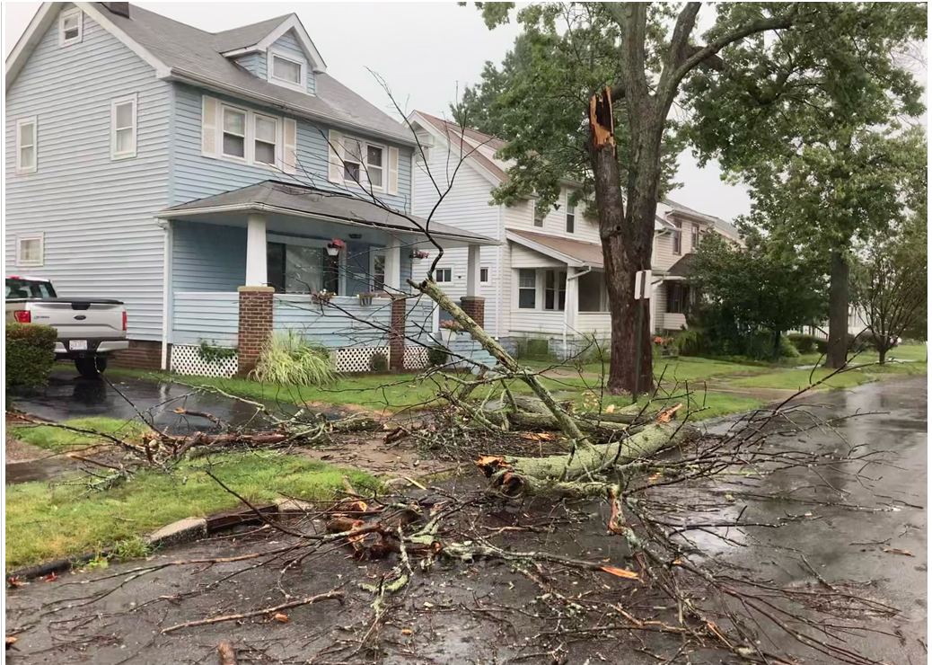 Garfield Heights tree down.png