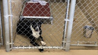 """Colorado has two different types of animal shelter movements, """"No Kill"""" and """"Socially Conscious"""" ."""