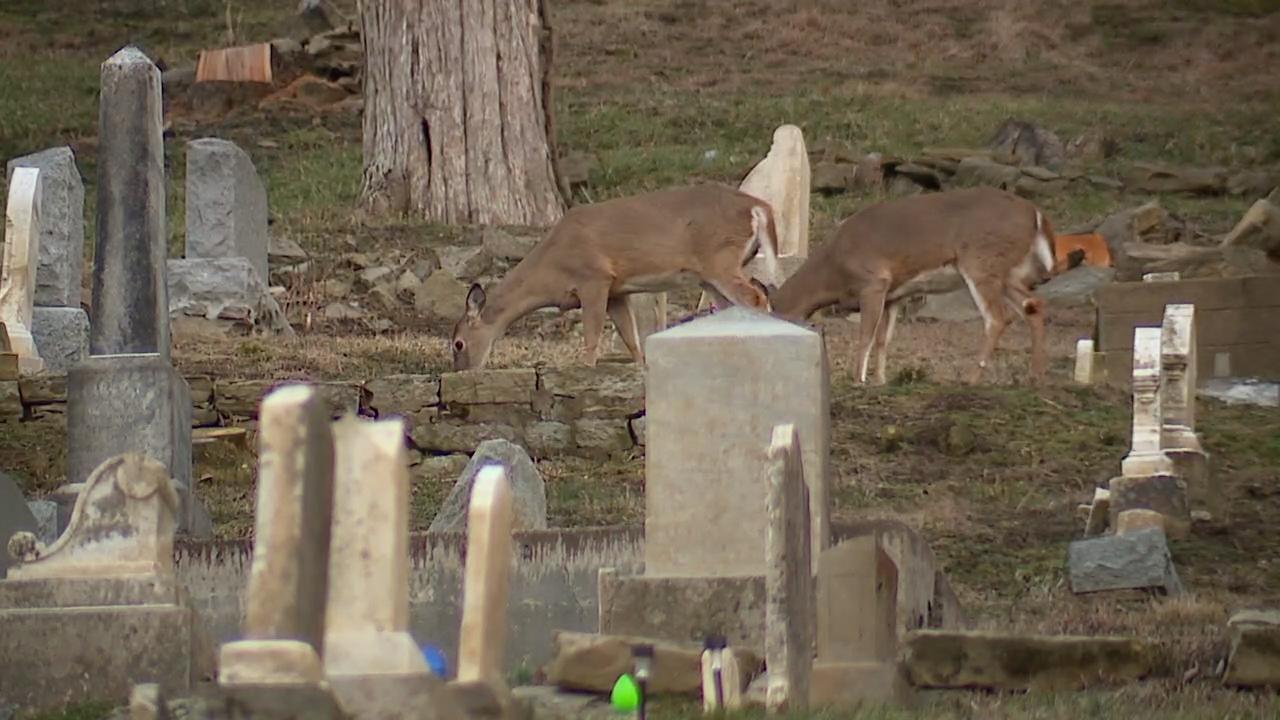 Deer at the Augusta Hillside Cemetery