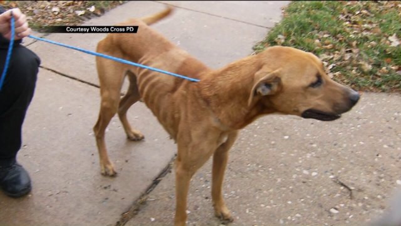 Couple facing animal abuse charges after dogs found emaciated at their former Woods Cross home