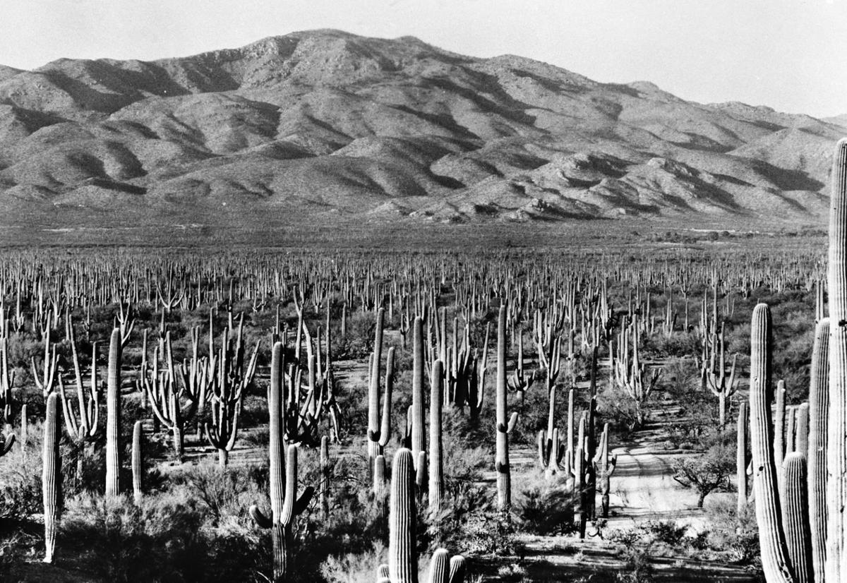 Saguaro National Park 1930s