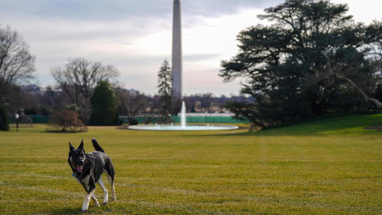 Major Biden Dog White House.jpg