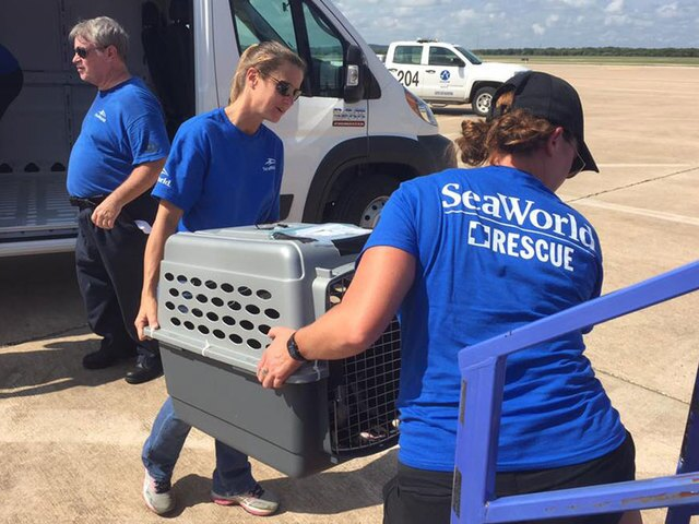 PHOTOS: Pets affected by Hurricane Harvey travel to San Diego