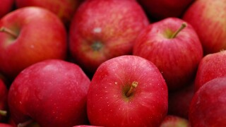 'There was nothing there:' Farming family says someone stole 22,000 apples from their orchard