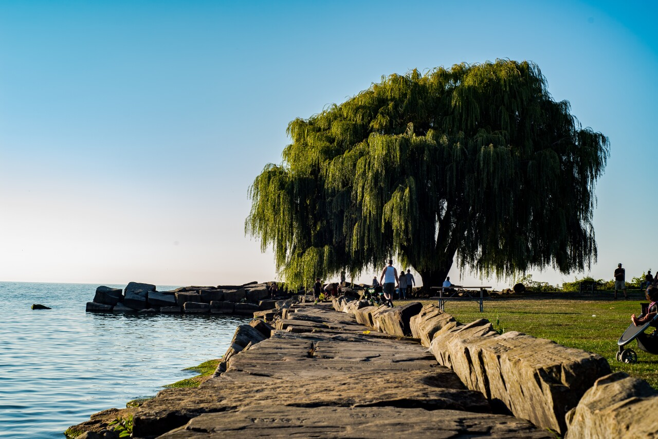 The Weeping Willow at Edgewater Park.