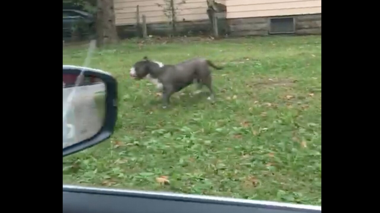 CLE pit bull attack, residents suffer injuries
