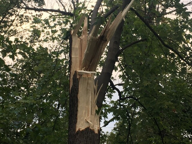 PHOTOS: Strong winds cause damage across Indy