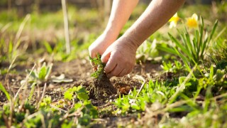 The Negative Impact of Weeds on Your Lawn