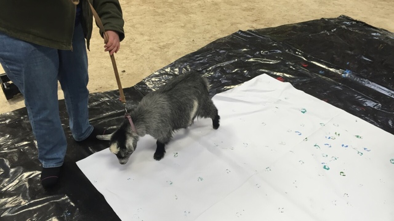 PHOTOS: Goats create art to be sold at auction