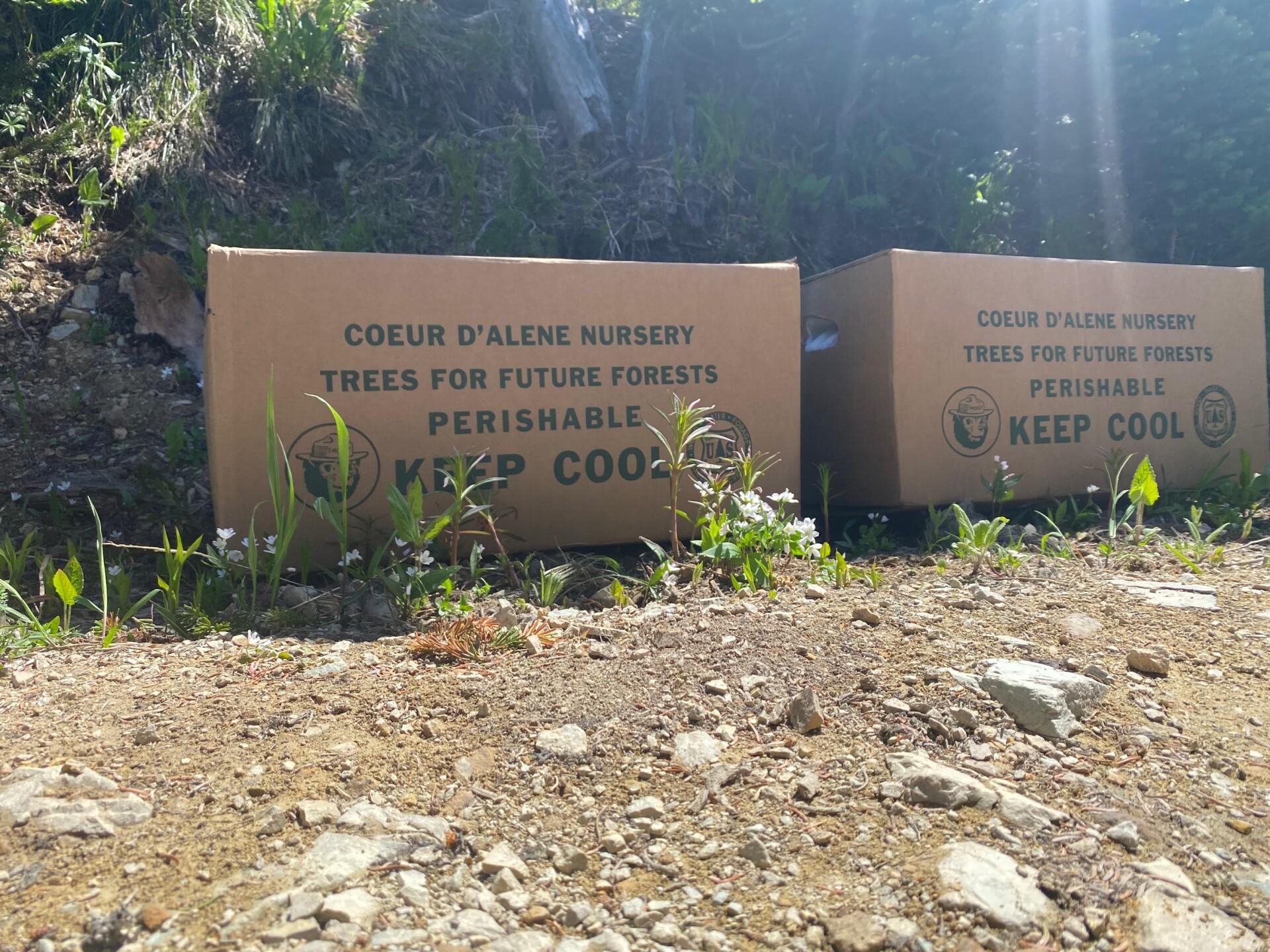 Whitefish Mountain Tree Planting