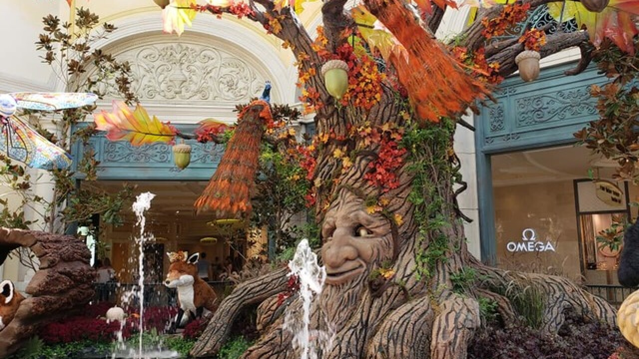 New fall display now open to public at Bellagio