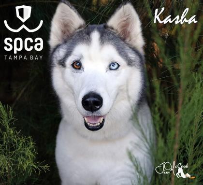 Kasha_40856151.jpg