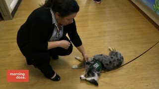 Paws and Claws: Canines For CommunityResilience