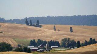 Idaho Wheat Harvest