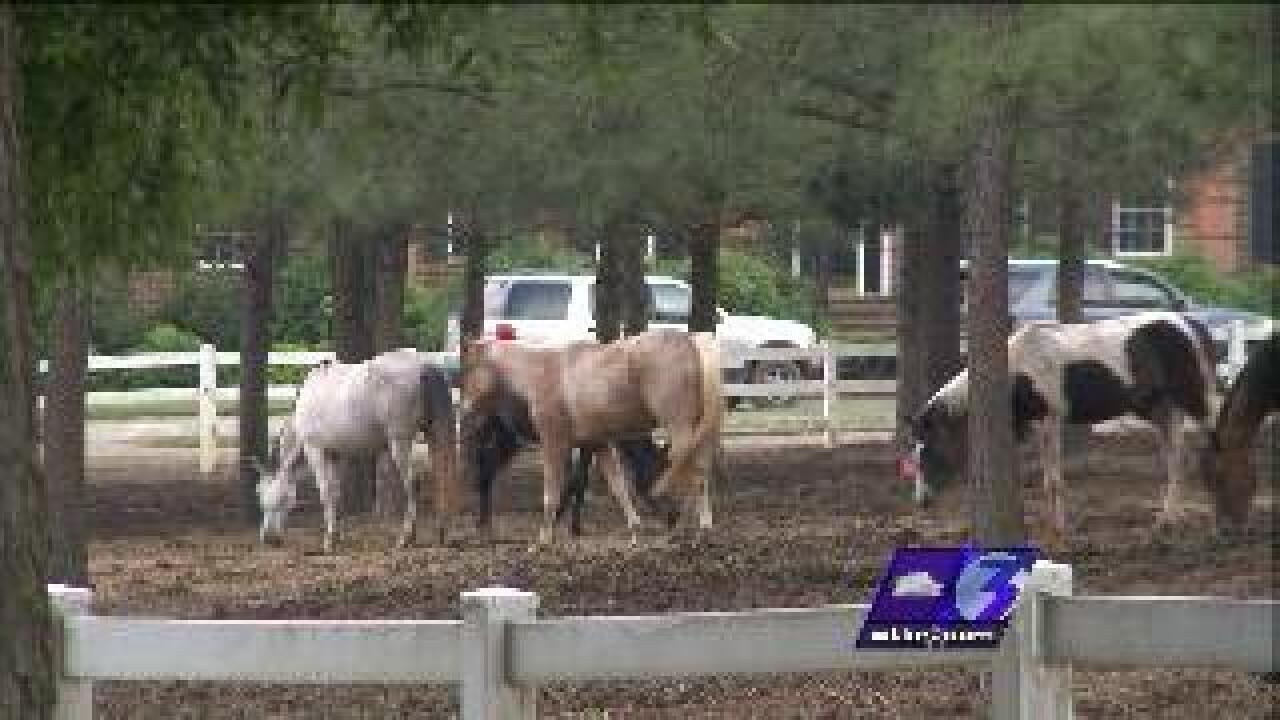 Neglected animals to stay on property of accused owner in Dinwiddie County