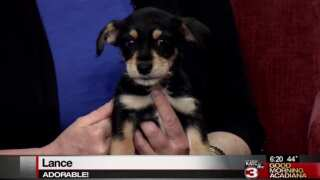 Pet Paws: Pet Adoptions with Acadiana Animal Aid