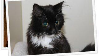 Pet Tales: Meet Bocelli