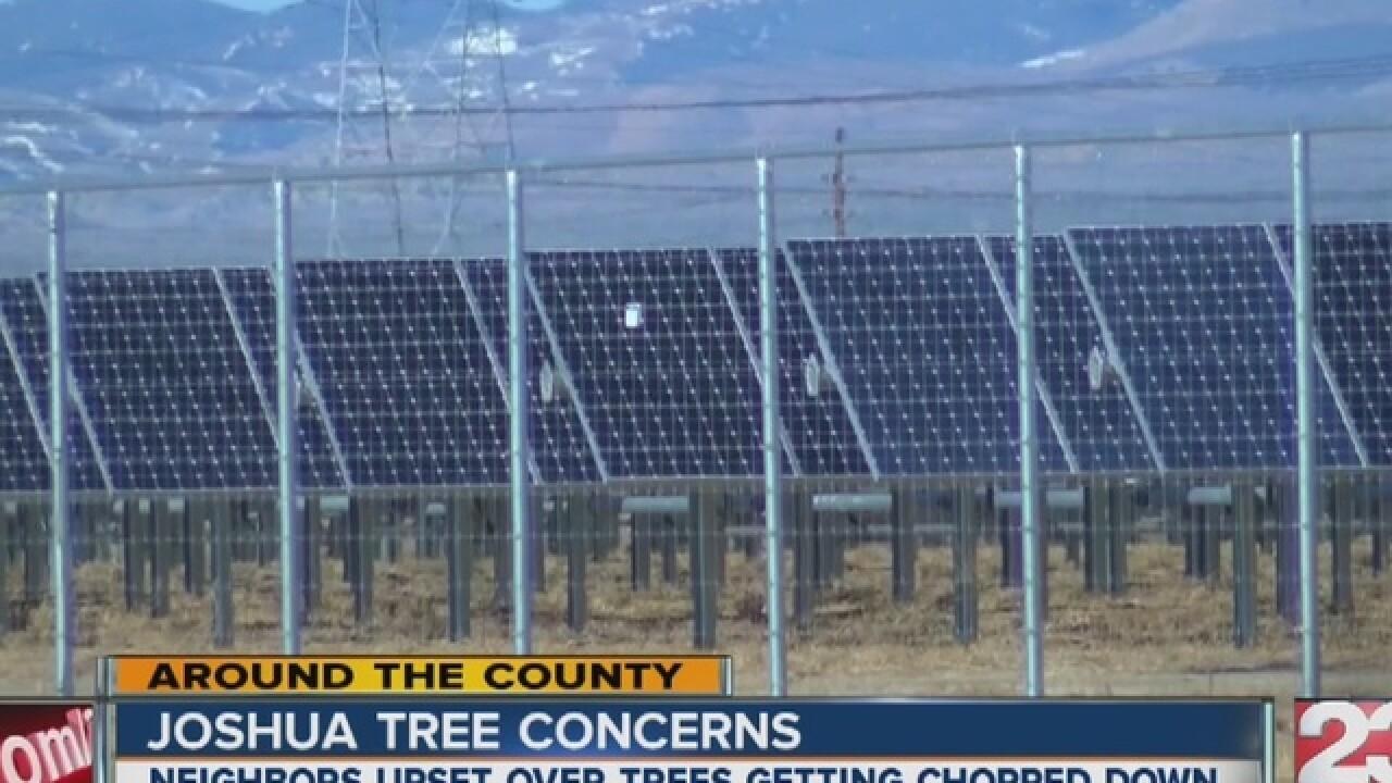 Residents upset over Joshua trees vs. solar