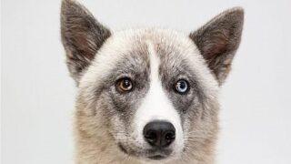 Pet Tales: Meet Ellie