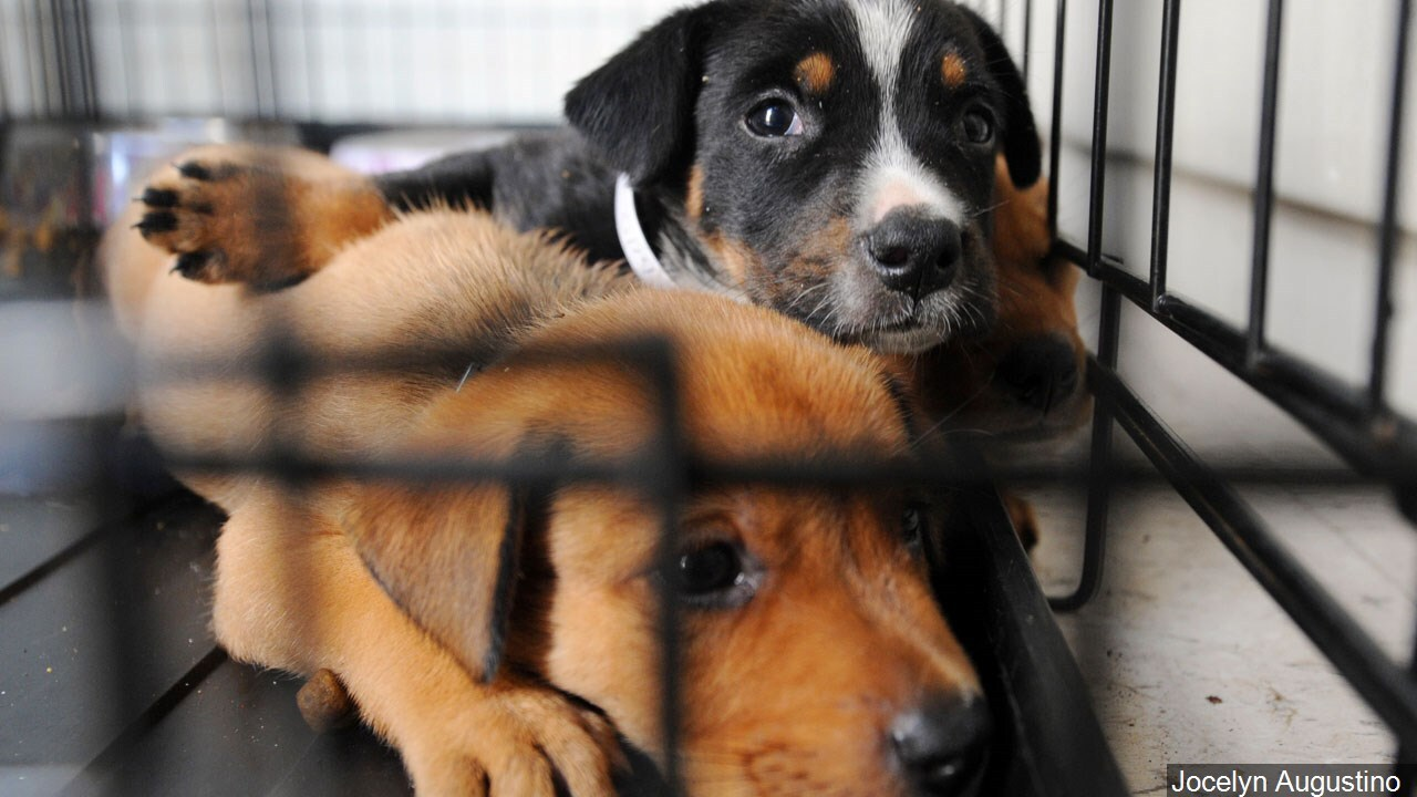 Find your true love at 'Cupid's Clear the Kennel Adopt-A-Thon'