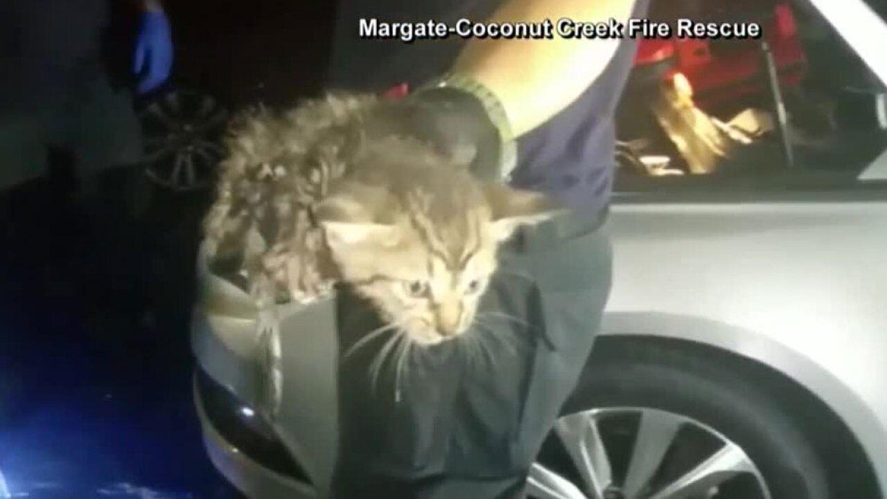 wptv-kitten-car-engine-rescue-.jpg