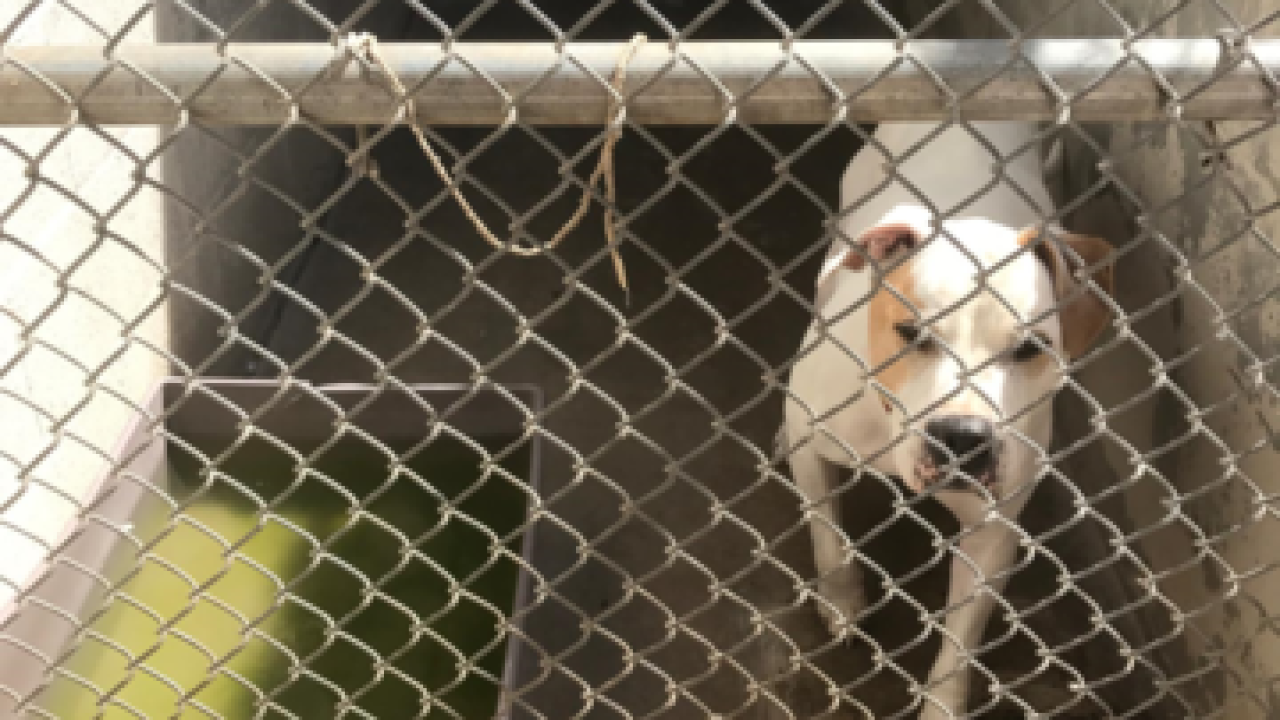 Problems exposed at no-kill shelter