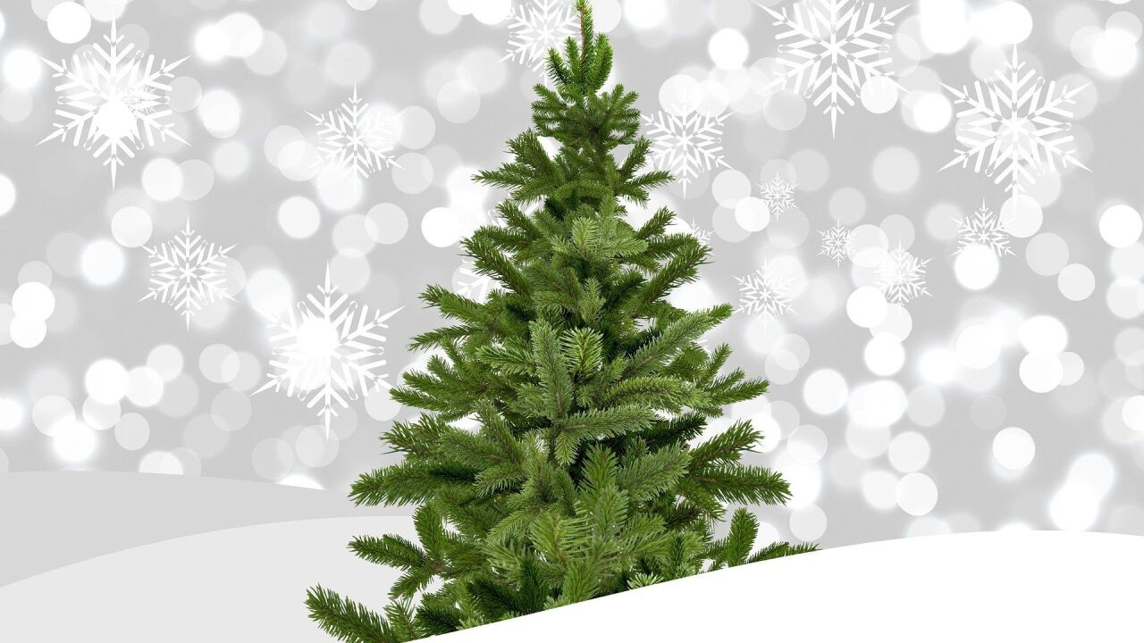 Robinson Family Farm offering discounts on Christmas trees to soldiers