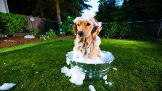 Best dog bathing tub 2021