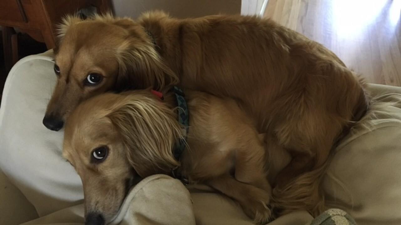 National Dog Day: Denver7 Dogs