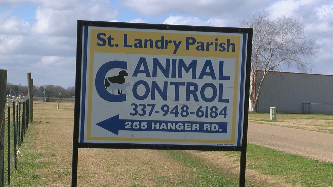 animal control.jpg