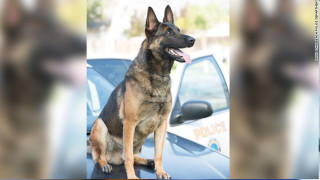 K9 dies in hot patrol car in California, police say