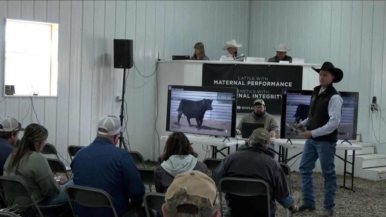 bull auction.jpg