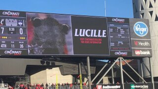 lucille the bearcat.jfif