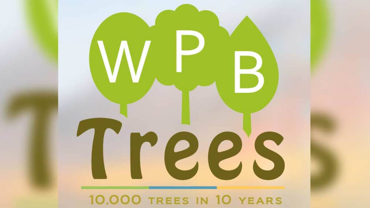 wptv-west-palm-trees.jpg