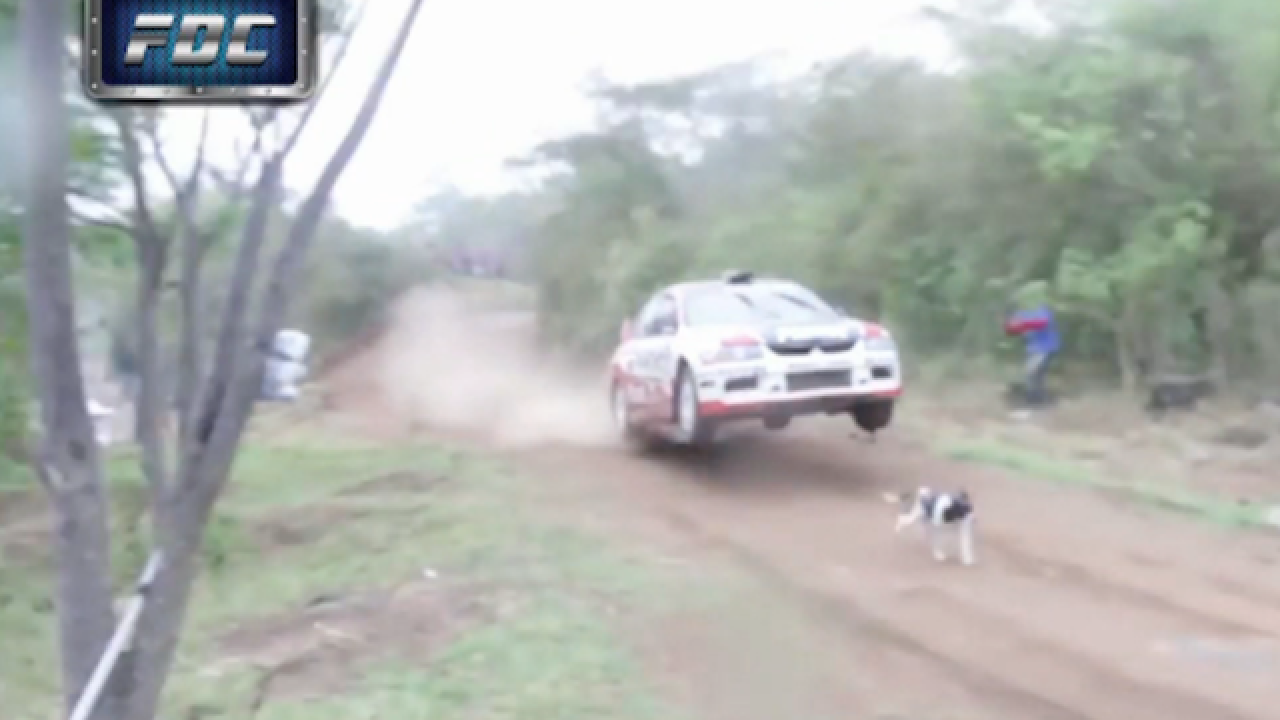 Racetrack miracle saves dog at very last minute