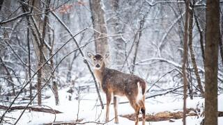 deer-1208198_1920.jpg