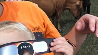 Eclipse 2017: Special glasses make statement, keep eyes safe