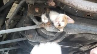 Kentucky mechanics rescue stowaway kitten trapped in frame of car