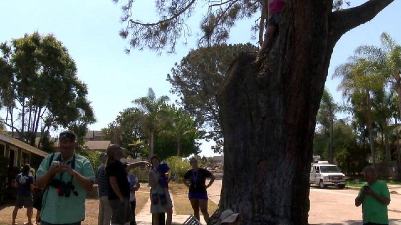 Not today: Historic tree gets stay of execution