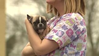 Can your pet spread coronavirus? Local vets say 'no'