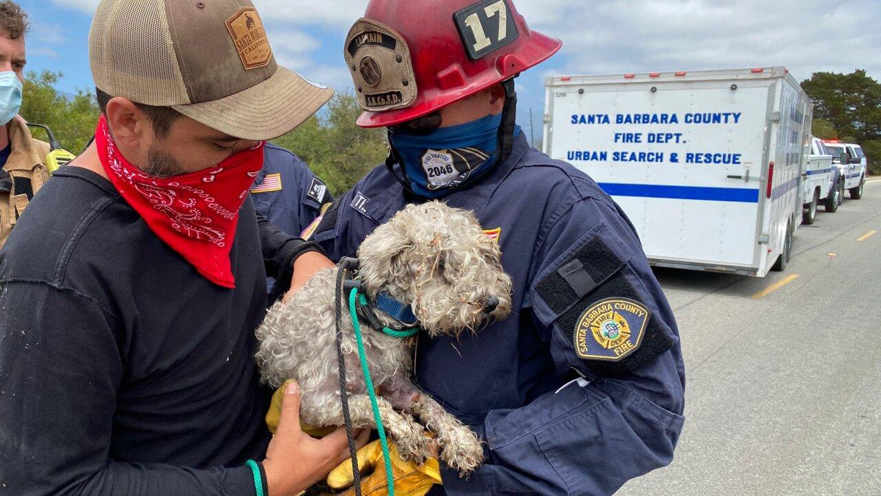 dog pipe rescue 2.jpg