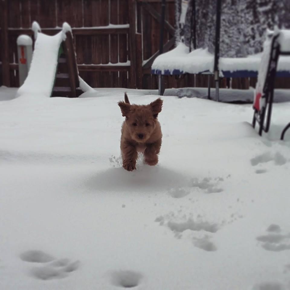 Photos: Share your snowphotos!