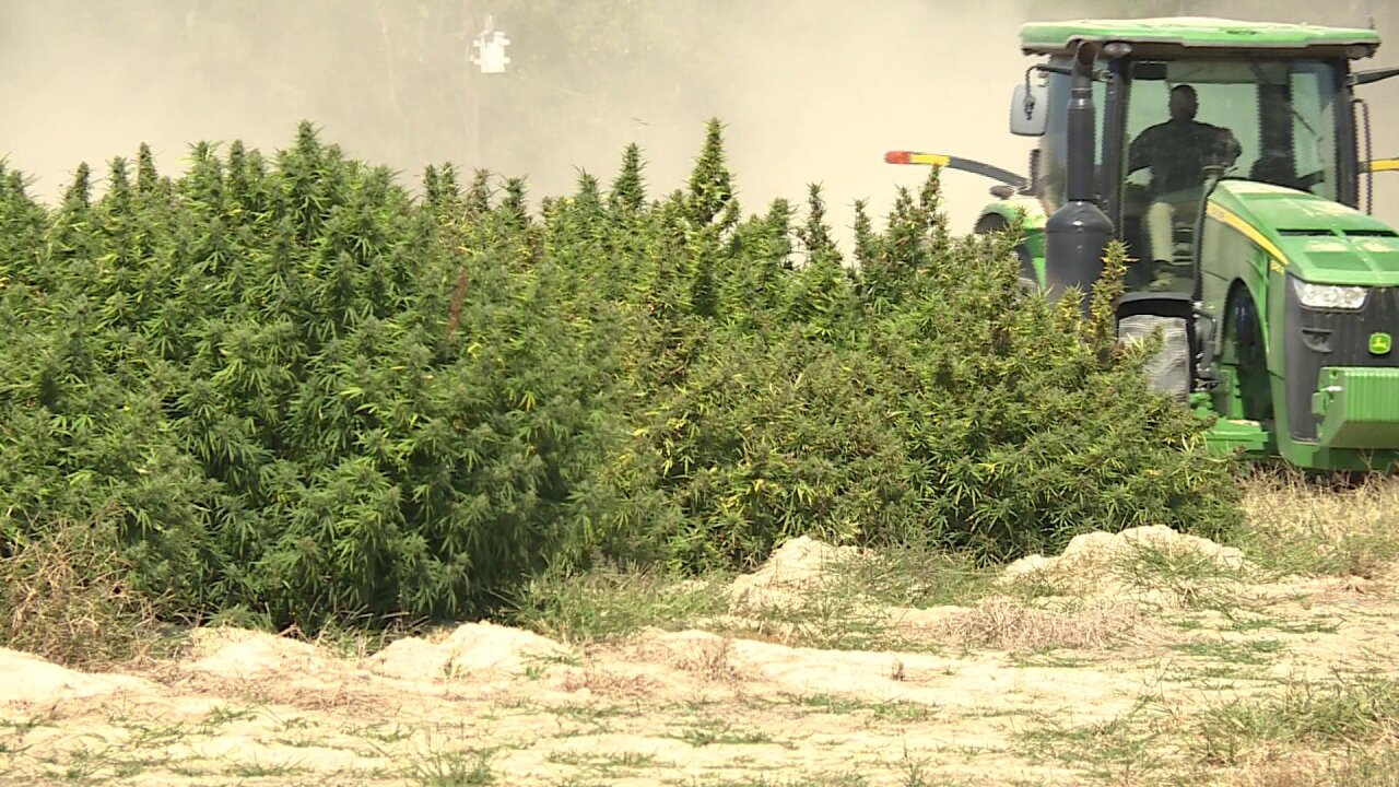 Why law enforcement believe thieves are stealing hemp plants from local farms
