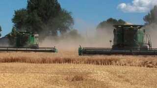 Montana Ag Network: The Montana-Mexico barley connection