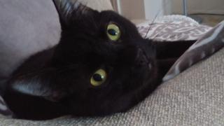 Black Cat 1.png