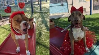 Valentine's dogs.jpg