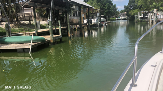 Florida DEP confirms blue-green algae in Bradenton as parts of Manatee River turn bright green