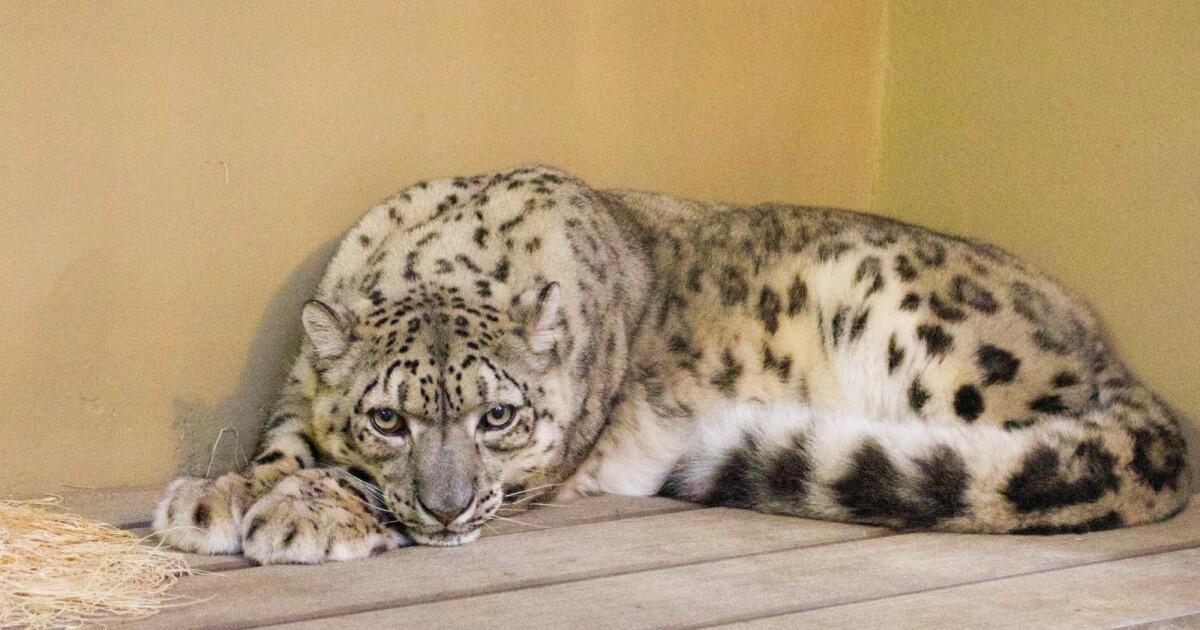 Santa Barbara Zoo welcomes new and returning animals - KSBY San Luis Obispo News