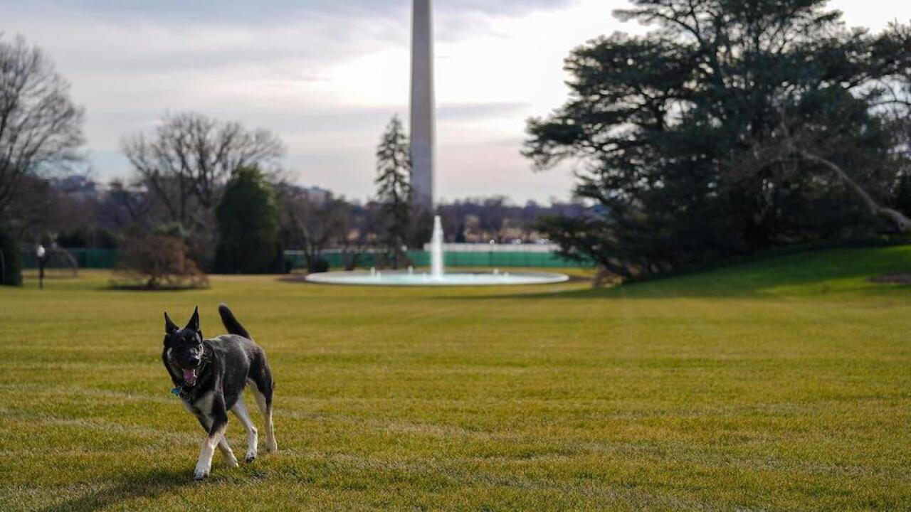 Joe Biden's dog Major
