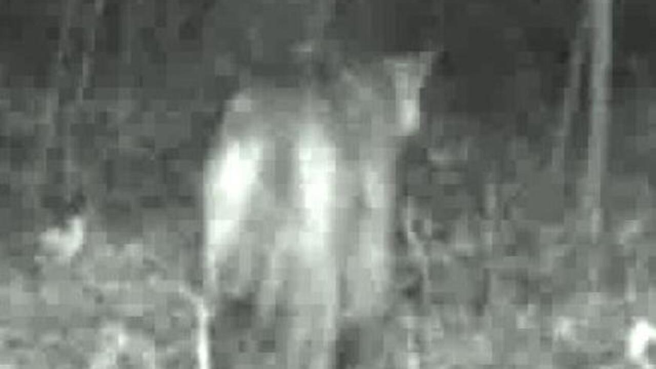 Cougar caught on camera again in Washington Co.